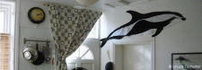 _On display - Hourglass dolphin at home